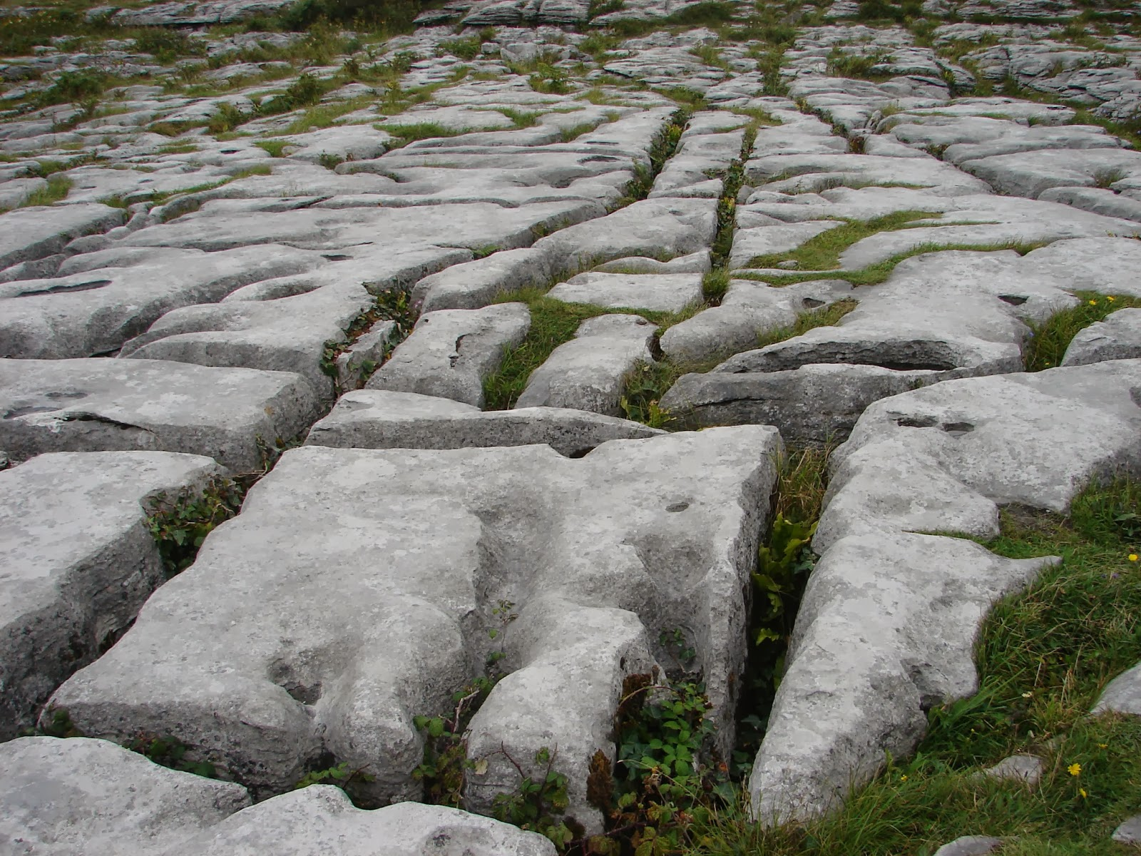 Chan calizo da meseta de Burren, en Pol na Brone (XMLS, 2013)