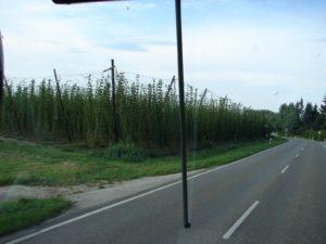 Estrada secundaria bávara de Ulm a Ratisbona, cos cultivos de lúpulo nas leiras lindeiras (XMLS)